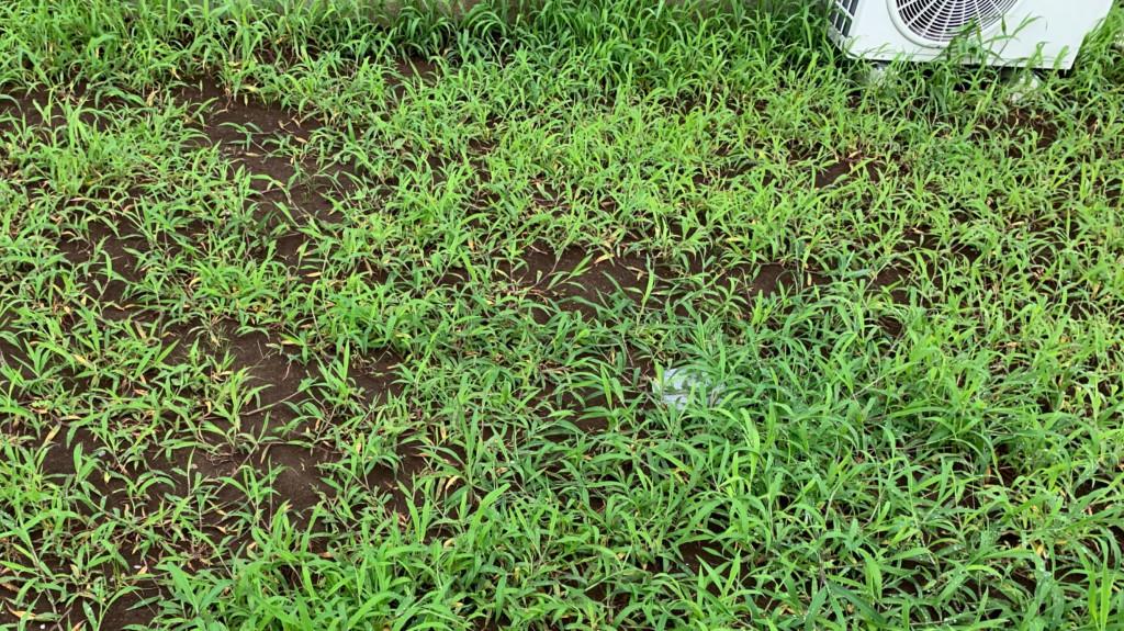敷地内に雑草が生える