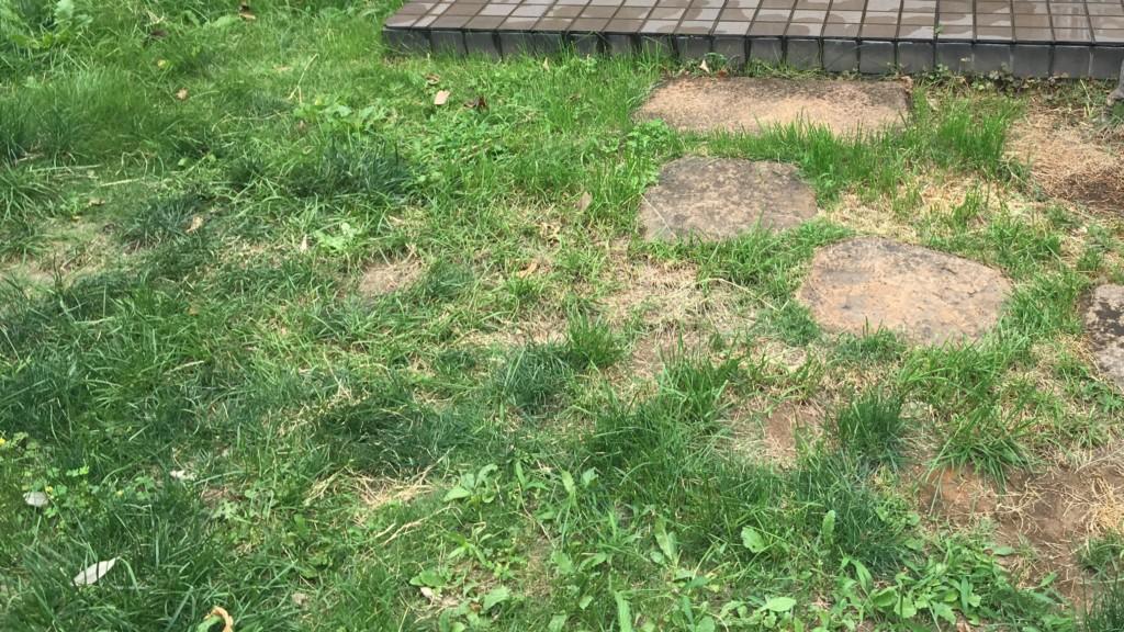 雑草が生え放題の庭